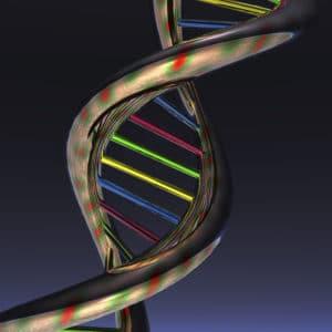 Digital Illustration of the DNA